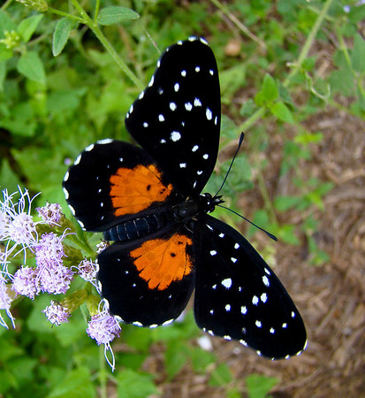 North American Butterfly Gardens, Mission TX